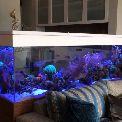 200-gallons-living-reef-aquarium-room-divider-side-1-youtube-from-4-living-room-interior-with-aquarium-sourceyoutube.com-of-4-living-room-interior-with-aquarium