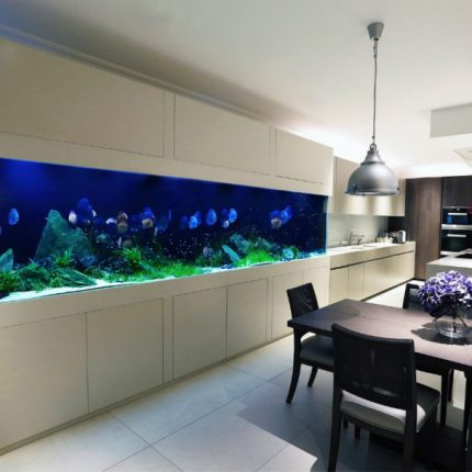 Serene-Modern-Interior-Housing-Discus-Fish-Fulham-London-900x607