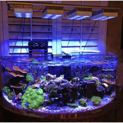 acrylic reef ready aquarium Awesome Photos 80 Gallon Acrylic Half Circle Aquarium w Stand for Sale Now ready