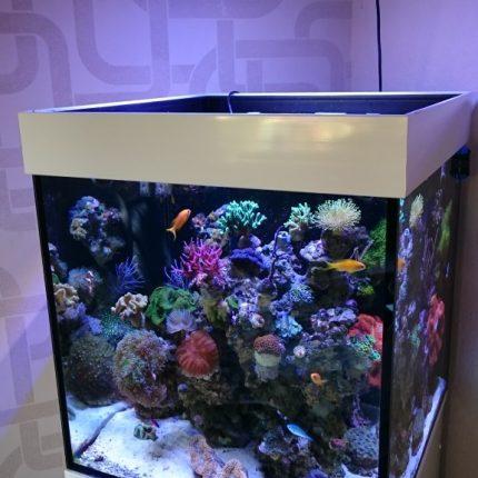atlantik-compact-24-inch-cube-reef-aquarium-576x1024