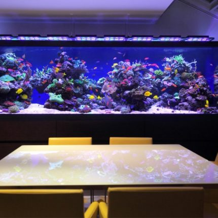 floor-aquarium-india-fish-tank-architectural-homes-architecture-luxury-london-townhouse-hampstead-design-1504x940-home-decor-custom-location-in-house-for-images-oceanarium-requirements-1080x675
