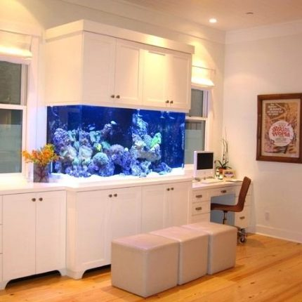 modern-beach-craftsman-seal-ca-tropical-home-office-fish-tank-betta